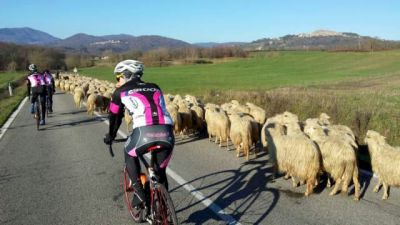 Country life - bicycling in Tuscany!