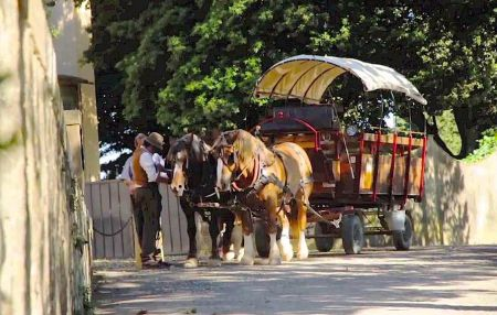 Tour of the Chianti countryside in a horse drawn wagon